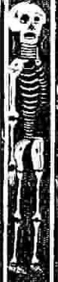 mortality_skeleton